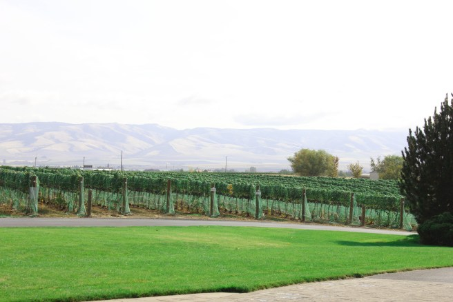 View of the Blue Mountains from Basel Cellars