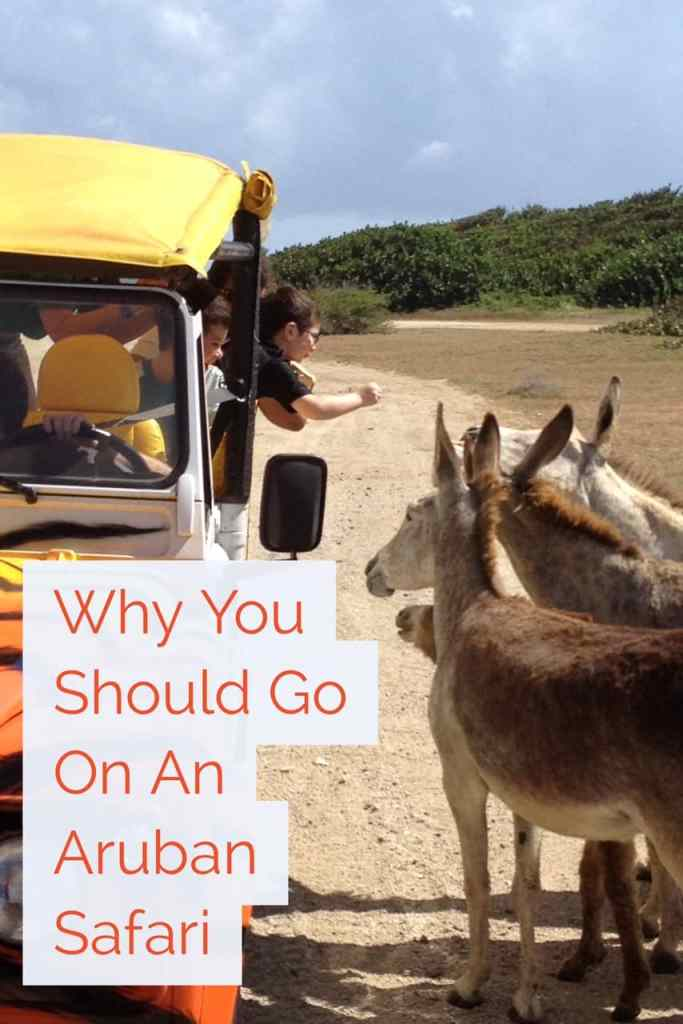 Why you should go on an Aruban safari...even if you hate tours. History, wildlife, & waves!