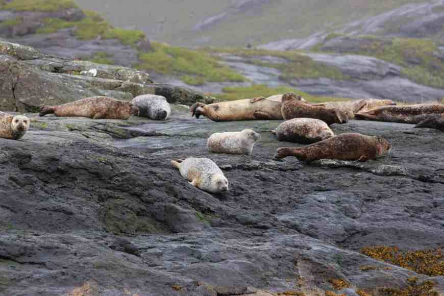 Wildlife abounds near Loch Coruisk. Take a boat trip from Elgol on the Isle of Skye to Loch Coruisk...backed by the moody Black Cuillins & very remote, there's beautiful wildlife and stunning untouched nature--like these seals! Planning a trip to Skye, Scotland itinerary tips! #scotland #isleofskye