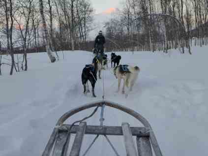 How to go dog sledding in the Arctic   Why it's a must and how to plan your trip to Tromso, what to do in Tromso, what to do in Norway, Norway trip planning tips   Tromso is 200 miles north of the Arctic Circle & perfect to visit for the Northern Lights and more! #dogsledding #tromso #norway