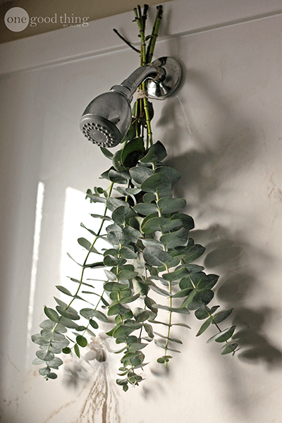 How To Take An Aromatic Eucalyptus Shower One Good Thing