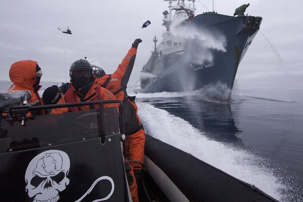 Sea Shepherd operation divine wind