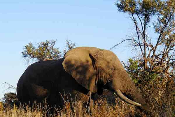 elephant Toronto Zoo Freedom