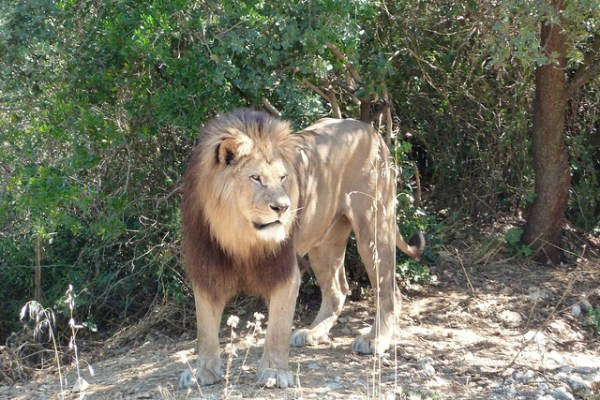 lions killed wild animals ohio