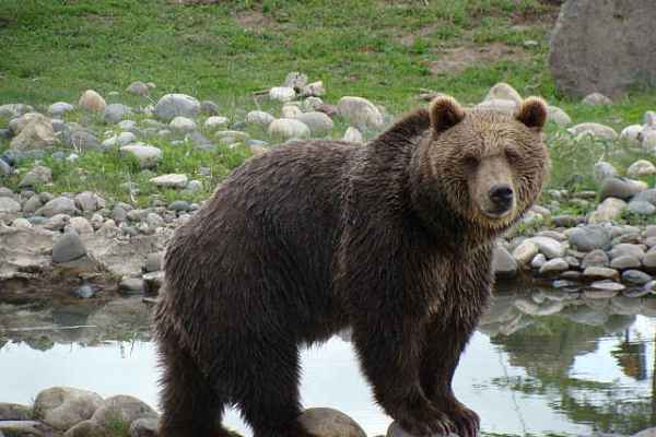 A Win for Grizzly Bears