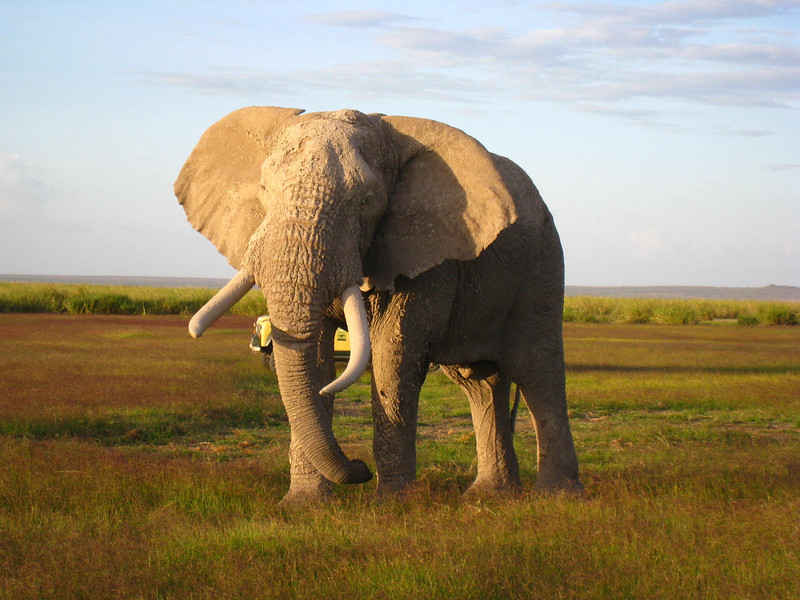 Human Conflict in Africa is Deadly for Elephants