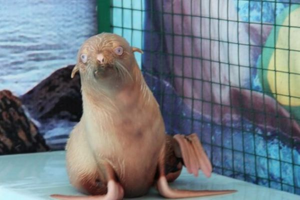 The World's Loneliest Seal Pup is Thriving in Her New Home