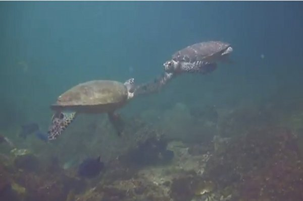High-Fiving Turtles
