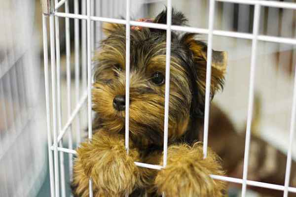 New Law May End Puppy Mills in Ireland