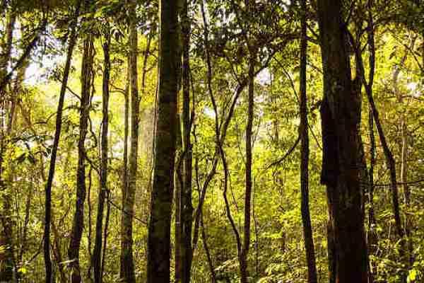 Brazil Meets Increasing Food Demands While Decreasing Deforestation