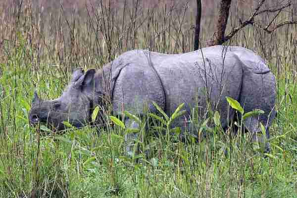 Additional Park Rangers Hired to Combat Rhino Poaching