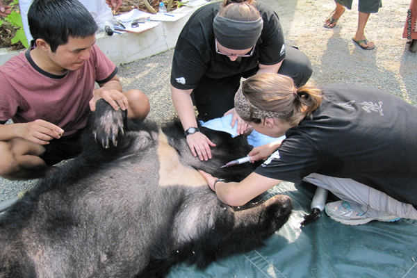 Dream Bear Bile Farm1
