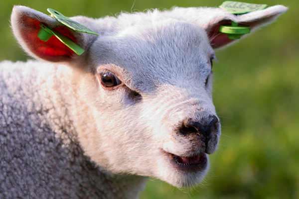 A Vegetarian Saves More Than 404 Animals Each Year!