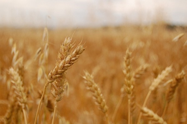 What Does Whole Grain Really Mean?
