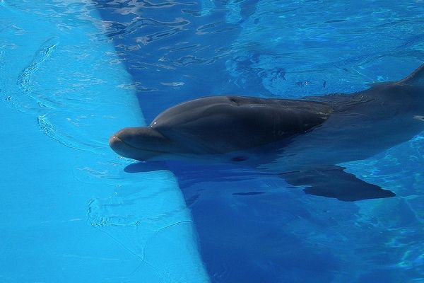 Switzerland Bans Import of Dolphins
