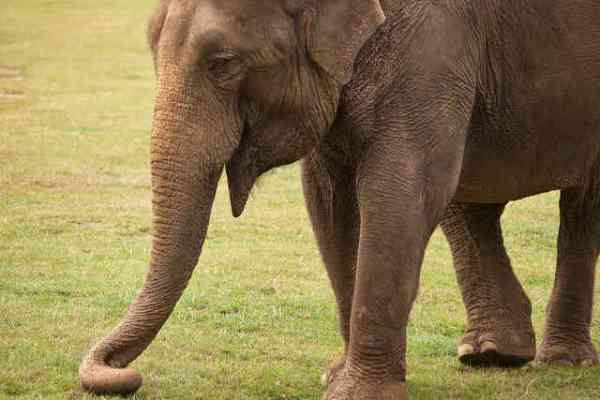 Wild Animals Banned from British Circuses