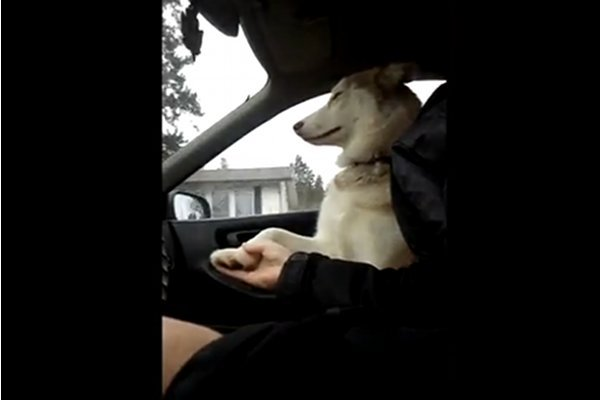 WATCH: Dog Wants to Hold Hands on Drives