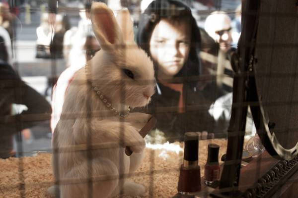 Does Animal Welfare Lead to More Animal Use? Animal Testing on the Rise in the U.K.
