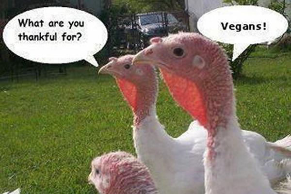 The Vegan Spirit of Thanksgiving