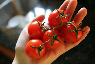 Wash Organic produce