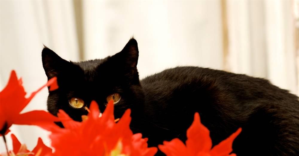 black cat_2