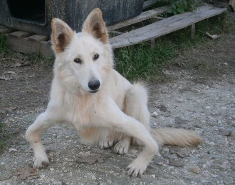 Abandoned Bow-Legged Dog Sandy Flown from Greece to England for a Rescue of a Lifetime (PHOTOS)