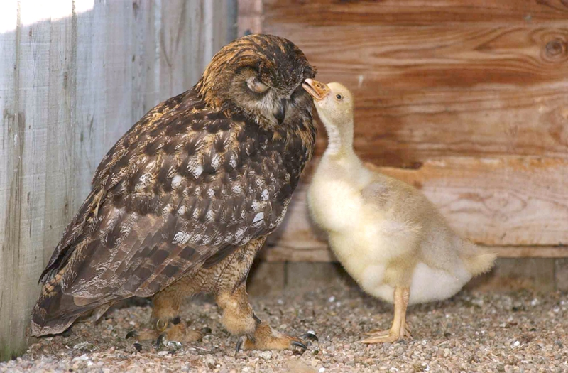 These Adorable Interspecies Friendship Will Leave Your Heart Happy (PHOTOS)