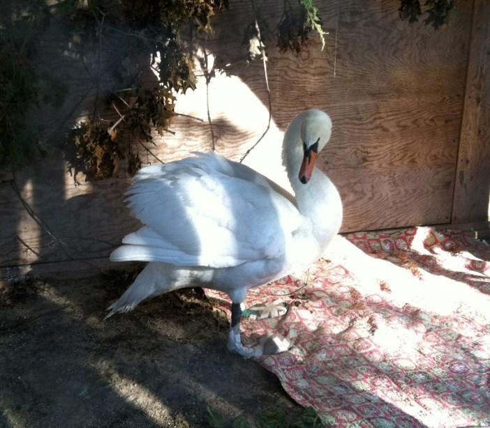 Feeding White Bread to Wild Birds is Killing Them