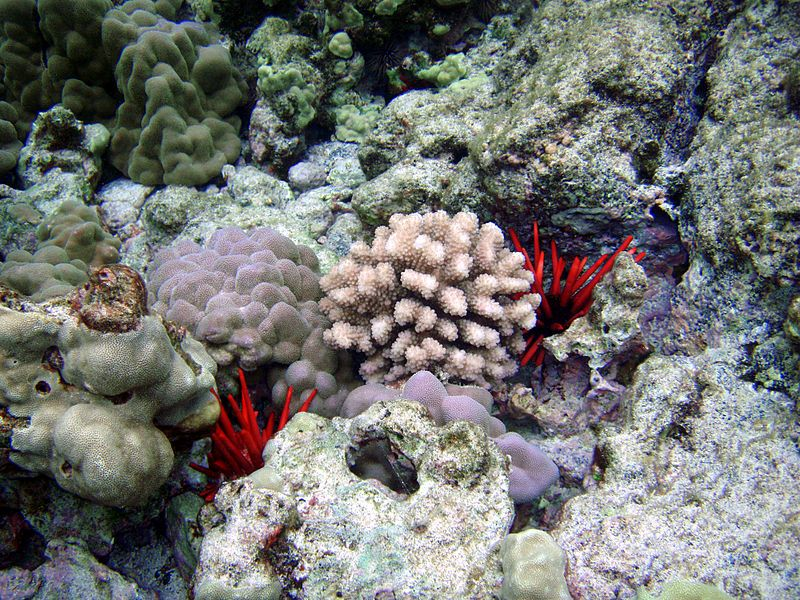 5 Types of Sea Life Affected by Ocean Acidification