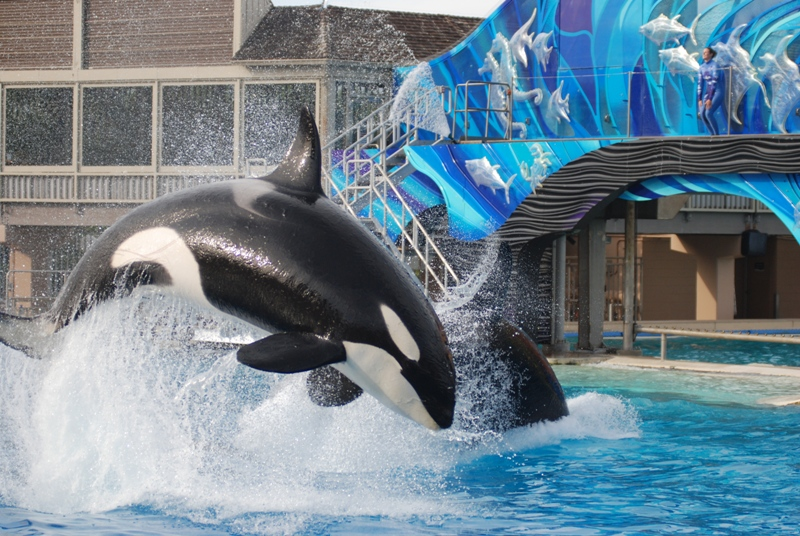 50 Reasons Why We Won't Be Celebrating SeaWorld's 50th Anniversary