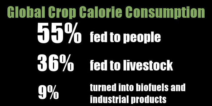 global crop calorie consumption