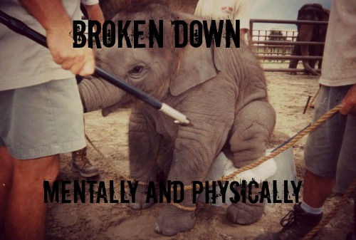 Ringling Brothers and Barnam and Bailey: The Worst Show on Earth!