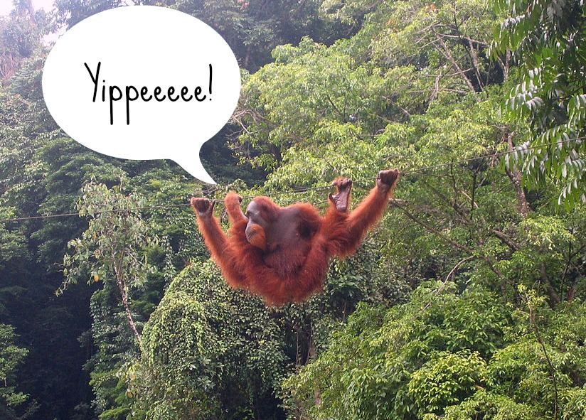 10 Outstanding Organizations Help to Save Endangered Orangutans