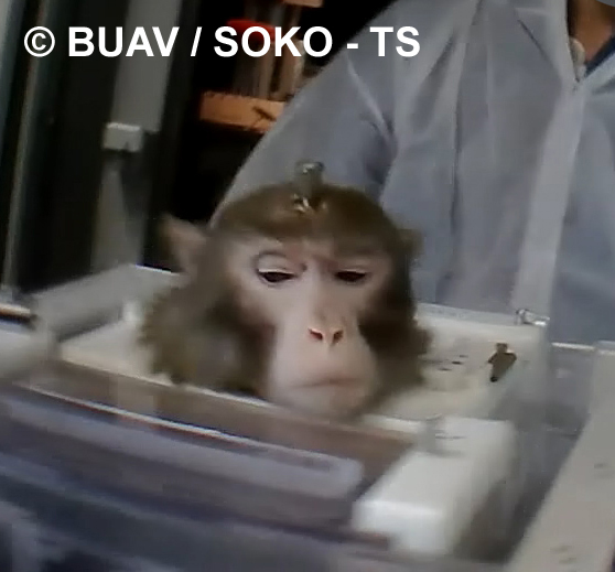The Living Nightmare Experienced by Monkeys in the Research Industry
