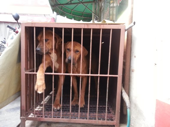 South Korea's Dog Meat Question