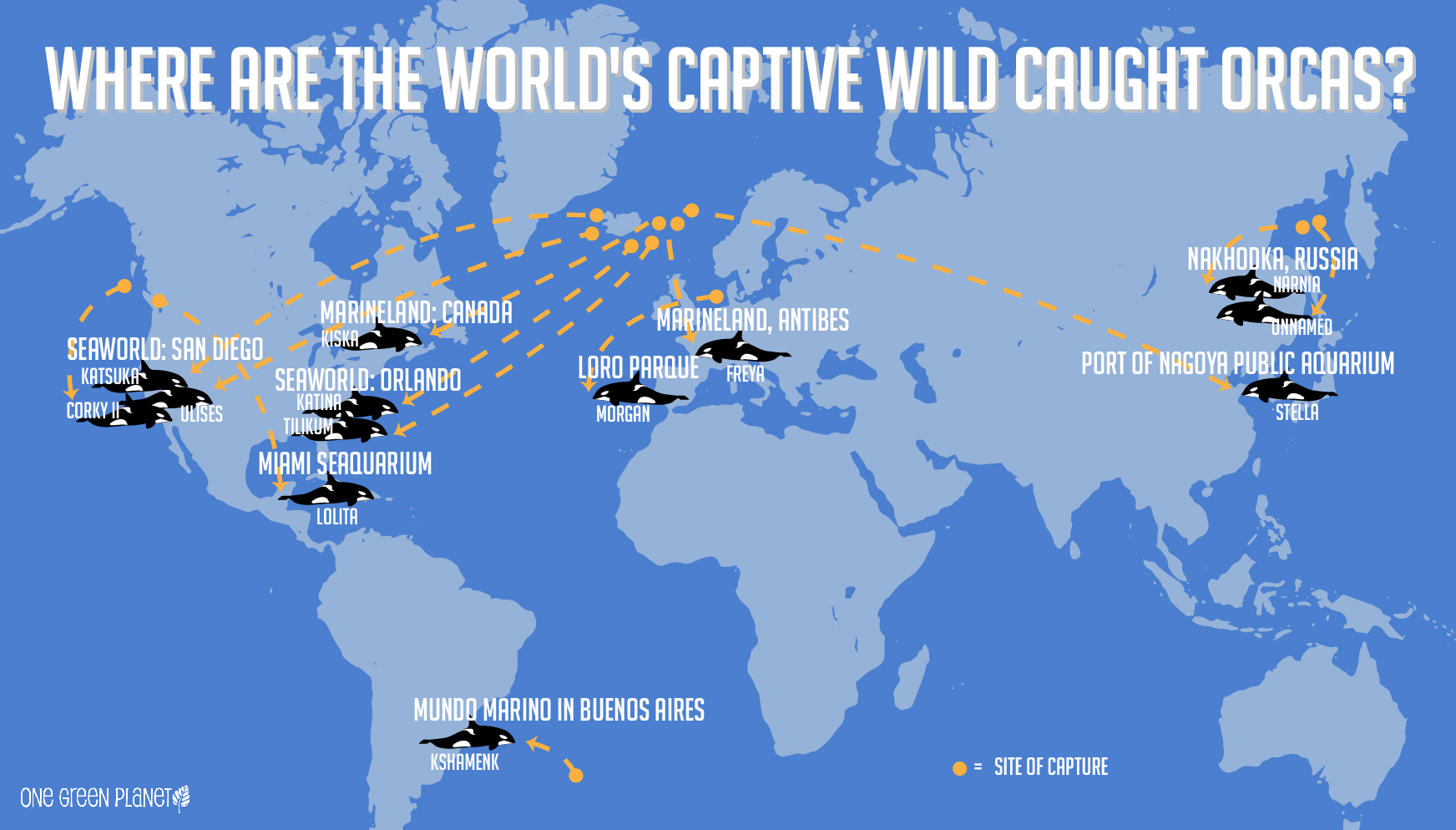 Where Are the World's Wild Caught Orca Whales Imprisoned?