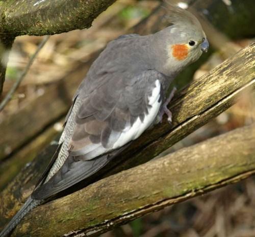 Consider the Plight of Captive Birds to Honor National Bird Day
