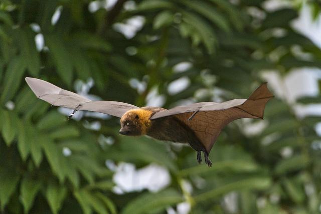 The Surprising Reasons Humans Need Bats