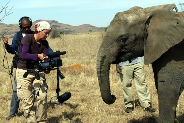 New Documentary, 'Do Elephants Go to Heaven?,' is Working to Tell the Amazing Stories of Elephants Across the Globe