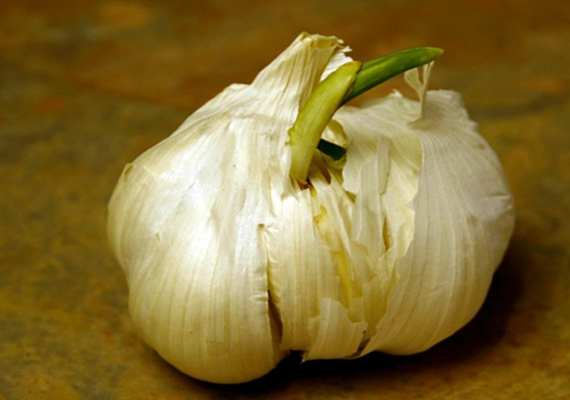 garlic-1141x800
