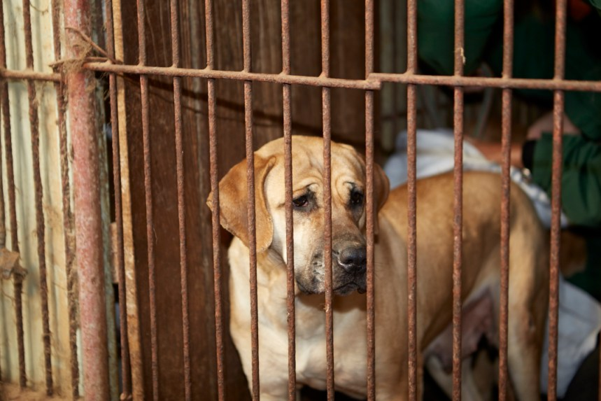 Ending South Korea's Dog Meat Industry