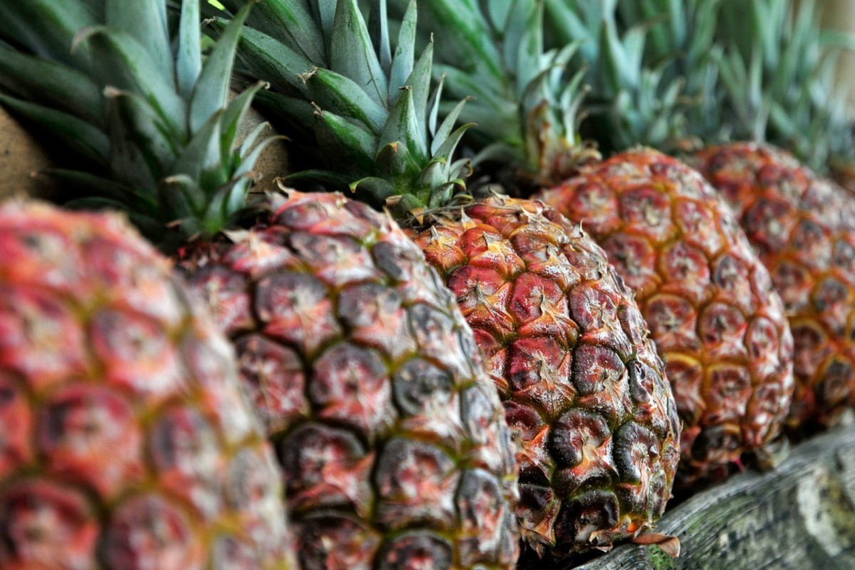 pineapples-1200x800