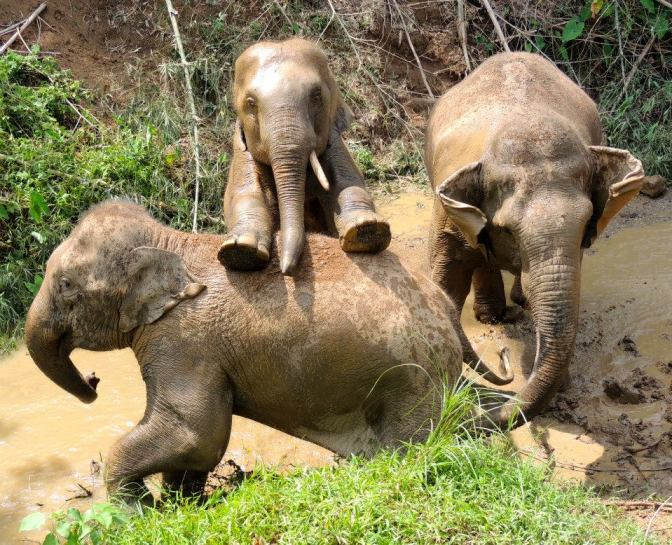 These 5 Sanctuaries are Dedicated to Saving Abused and Neglected Elephants