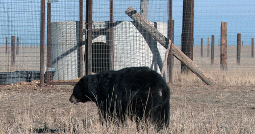 Empty the Cages! 6 Animals We've Fought for to Free Them From Life in Captivity
