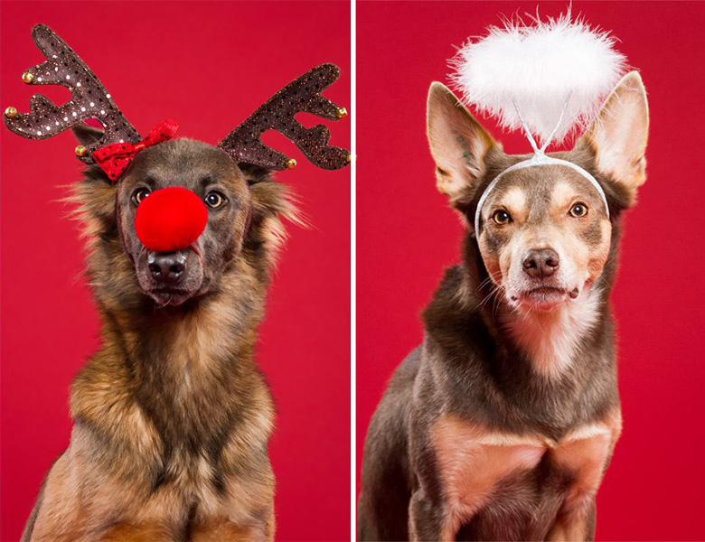 These Adorable and Festive Christmas Portraits of Dogs Bring on the Holiday Cheer