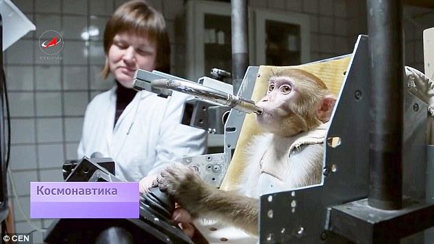 russia monkey2