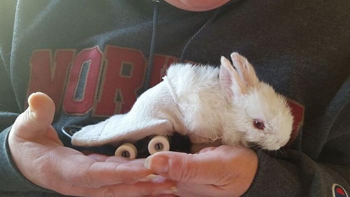 paralyzed-bunny-wheelchair-skateboard-wheelz-8