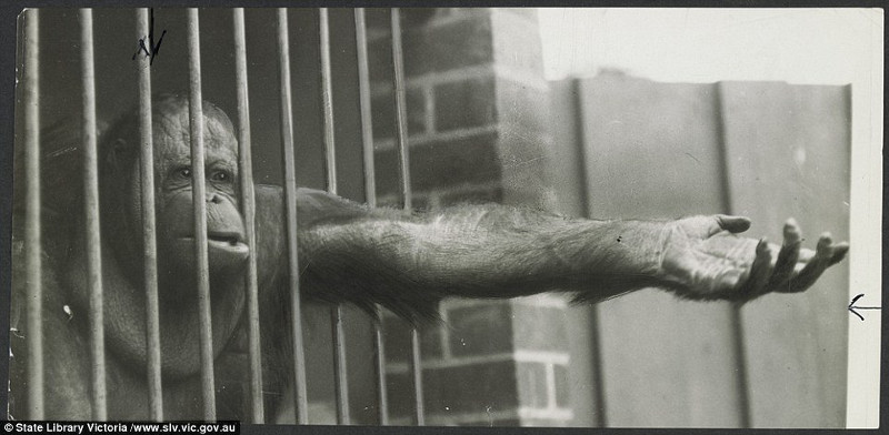 Shocking Images Reveal Just How Cruel Zoos Were in Times Past – and Why We Still Need to Empty the Cages Today