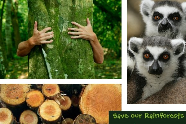 how to save our jungle Partnering with indigenous communities to save our rainforests  the rainforest foundation us, together with our sister organizations rainforest foundation norway and rainforest foundation uk, partners with indigenous communities to protect the rainforest about us what we do.