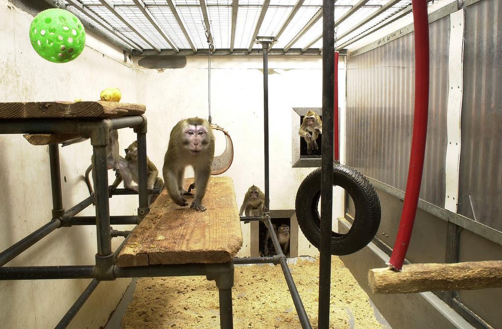5 Ways Animal Testing Hurts Humans One Green Planet